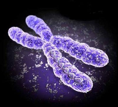 chromosome2.jpg