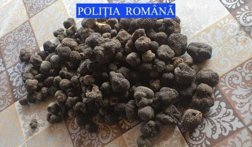 Amplă acțiune a Poliției Române! 1.200 de kilograme de trufe negre au fost confiscate