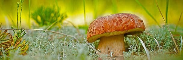 It's National Mushroom Month!